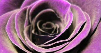 Los colores para Piscis - PiscisHoy.net